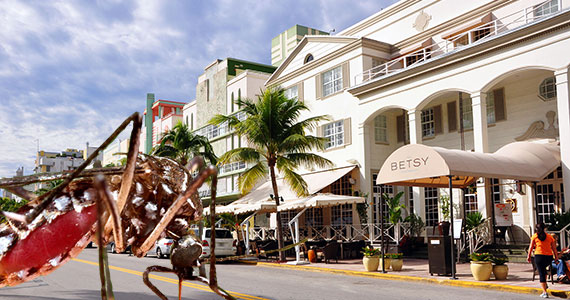 2009 shot of Ocean Drive (Credit: chensiyuan) and a mosquito