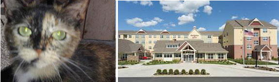 Cotton the cat and the Marriott Residence Inn on Long Island